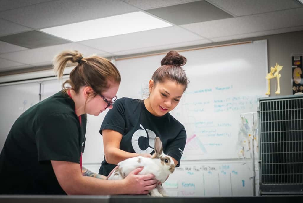 CCC Vet Assistants Check Rabbits Pulse